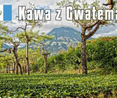 plantacja-kawy-w-Guatemali