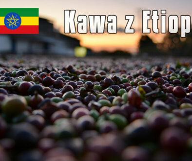 plantacja-kawy-Etiopia