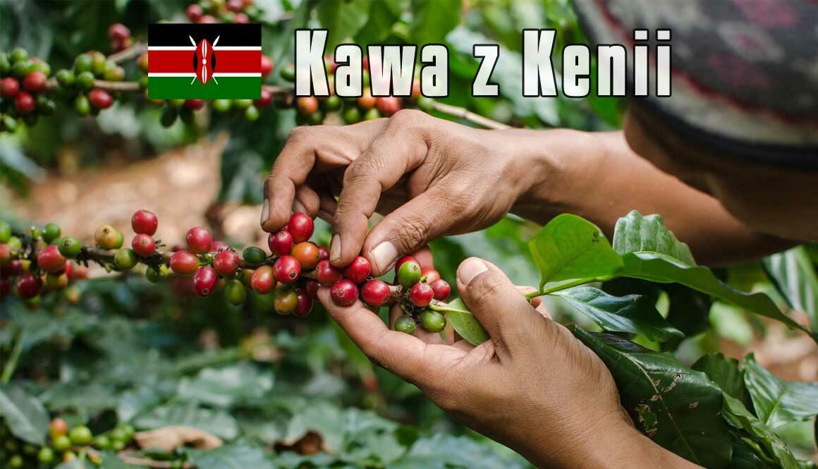 plantacja-kawy-Kenia2