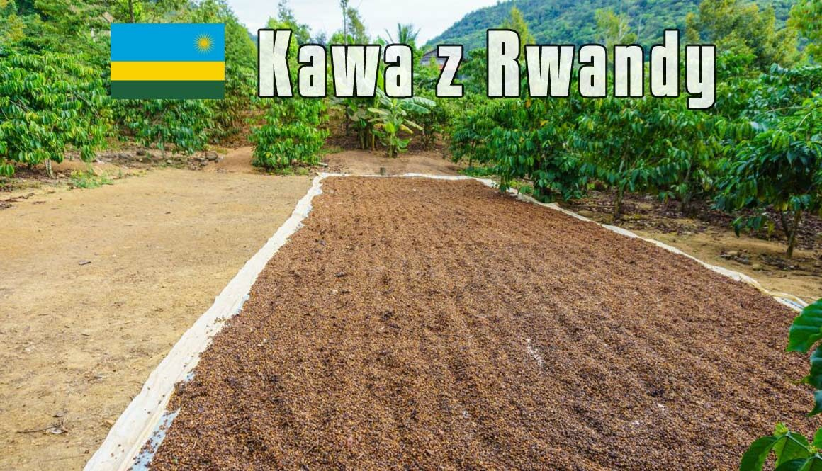 plantacja-kawy-Rwanda