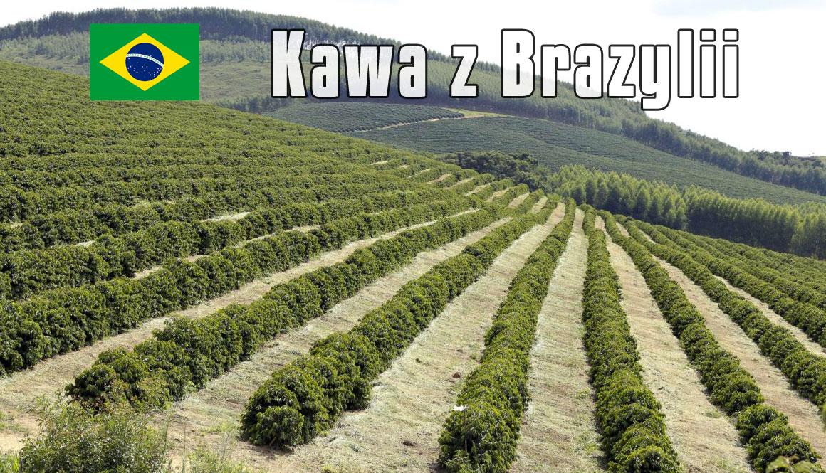 plantacja-kawy-Brazylia