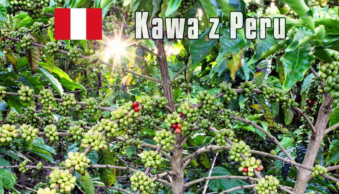 plantacja-kawy-peru